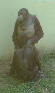 monkey-1-781963.jpg