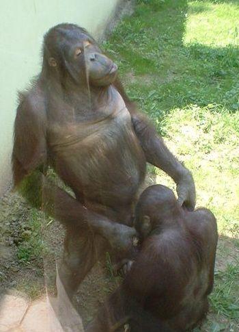 monkey cum in pussy